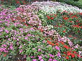 知卡宣森林公園 花蓮平價網站:ST838129_大小 .JPG