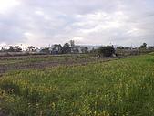花東縱谷 平原 彩畫 風景 圖   (16):花東縱谷 大地豐收 風景 圖_10.jpg
