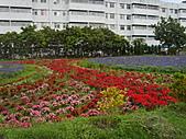 知卡宣森林公園 花蓮平價網站:ST837750_大小 .JPG