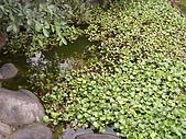 亞士都後花園風采:亞士都後花園池塘12.JPG