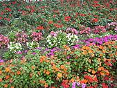 知卡宣森林公園 花蓮平價網站:ST838135_大小 .JPG