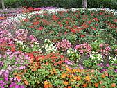 知卡宣森林公園 花蓮平價網站:ST838136_大小 .JPG