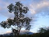 知卡宣森林公園 花蓮平價網站:ST837822_大小 .JPG