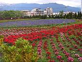 知卡宣森林公園 花蓮平價網站:ST837754_大小 .JPG