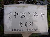 植物 專輯 花蓮旅遊服務網推薦:中國 冬青 花蓮旅遊服務網推薦_5.jpg