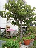 花蓮民宿 花蓮網站:ST836851_大小 .JPG