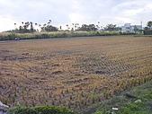 花東縱谷 平原 彩畫 風景 圖   (16):花東縱谷 大地豐收 風景 圖_05.jpg