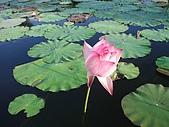 記錄花蓮之美 rn網站:rn 花東 縱谷 風情 蓮花