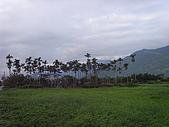 花東縱谷 平原 彩畫 風景 圖   (16):花東縱谷 大地豐收 風景 圖_14.jpg