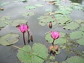 花蓮 蓮花池:120