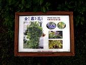 知卡宣森林公園 花蓮平價網站:金露花 花蓮平價網站00.jpg