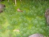 亞士都後花園風采:亞士都後花園池塘4.JPG