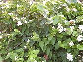 植物 專輯 花蓮旅遊服務網推薦:大紫蟬 花蓮旅遊服務網推薦_6.jpg