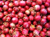 蔓越莓:蔓越莓06a.jpg