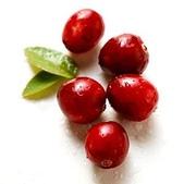 蔓越莓:Cranberry06h1.jpg