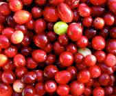 蔓越莓:蔓越莓06b.jpg