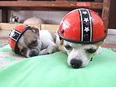 狗狗造型秀:DSCF8121.JPG