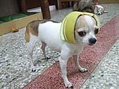 狗狗造型秀:DSCF7938.JPG
