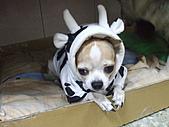 狗狗造型秀:DSCF8989.JPG