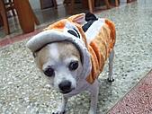 狗狗造型秀:DSCF8991.JPG