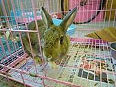 遠東動物園:L1030434.JPG