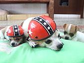 狗狗造型秀:DSCF8118.JPG