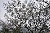 台中-武陵農場:20150322台中-武陵農場4.JPG
