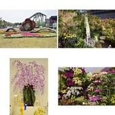 台南-國際蘭展2015:相簿封面