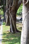 台南-市立文化中心:20140411台南市立文化中心4.JPG