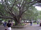 金門-榕園:2009金門榮園20.JPG