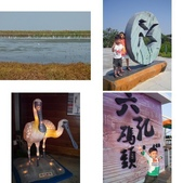 台南-台江國家公園:相簿封面