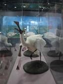 台南-台江國家公園:2012台江國家公園17.JPG