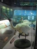 台南-台江國家公園:2012台江國家公園18.JPG