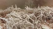 南投-武嶺:20150206武嶺賞雪11.jpg