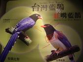 金門-雙鯉湖濕地自然中心:2009金門雙鯉湖濕地自然中心7.JPG