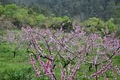 台中-武陵農場:20150322台中-武陵農場10.JPG