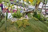 台南-國際蘭展2015:20150309台南-國際蘭展17.JPG