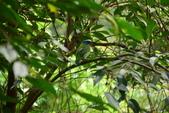 台南-新化植物園:20140415新化國家植物園6.JPG