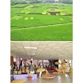 台南-後壁農會彩繪稻田:相簿封面