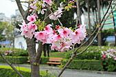 20113月中正紀念堂櫻花試拍:IMG_2101.JPG