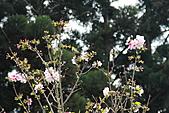 20113月中正紀念堂櫻花試拍:IMG_2103.JPG