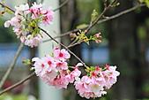 20113月中正紀念堂櫻花試拍:IMG_2105.JPG