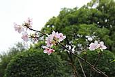 20113月中正紀念堂櫻花試拍:IMG_2137.JPG