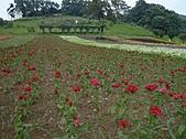 20100822大溪花海農場:P1100084.jpg