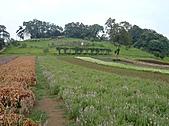 20100822大溪花海農場:P1100085.jpg