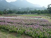 20100822大溪花海農場:P1100105.jpg