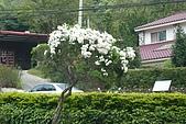 20100502新竹九芎湖賞桐花:P1090482.jpg