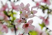20113月中正紀念堂櫻花試拍:IMG_2057.JPG