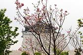 20113月中正紀念堂櫻花試拍:IMG_2071.JPG