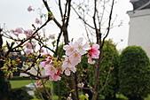 20113月中正紀念堂櫻花試拍:IMG_2081.JPG